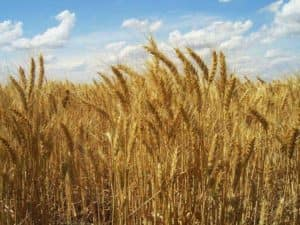 Grain Industry Picture