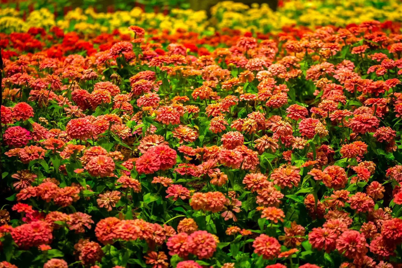Biotanical garden