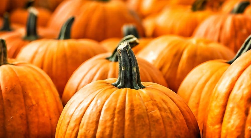 A close up of pumpkins that you would see at a Chevy Dealer, Bethlehem, PA, celebrating fall.