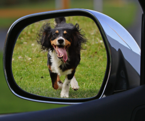 closeup-rearview-mirror-with-view-of-dog-running