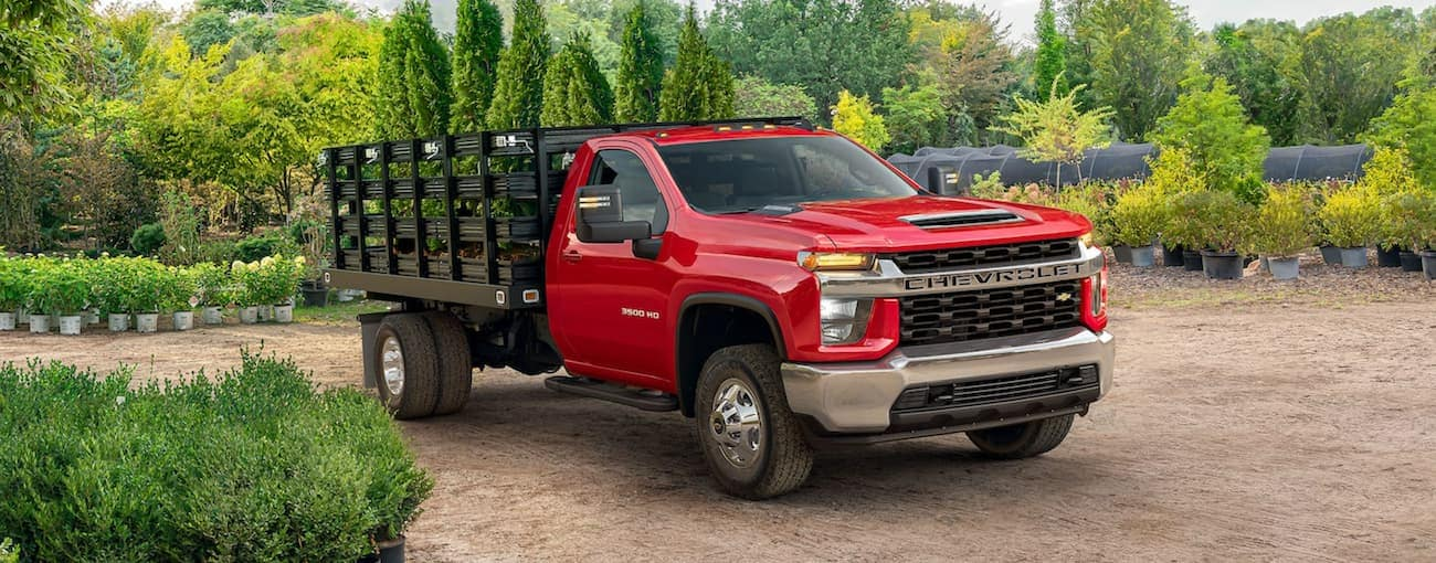 A red 2021 Chevy Silverado 3500 HD Chassis Cab with a landscaping bed is moving plants at a nursery.